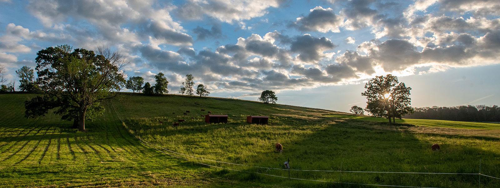 Horsebarn Hill at UConn Storrs near sunset.